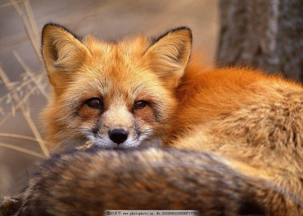 壁纸 动物 狐狸 猫 猫咪 小猫 桌面 1024_731
