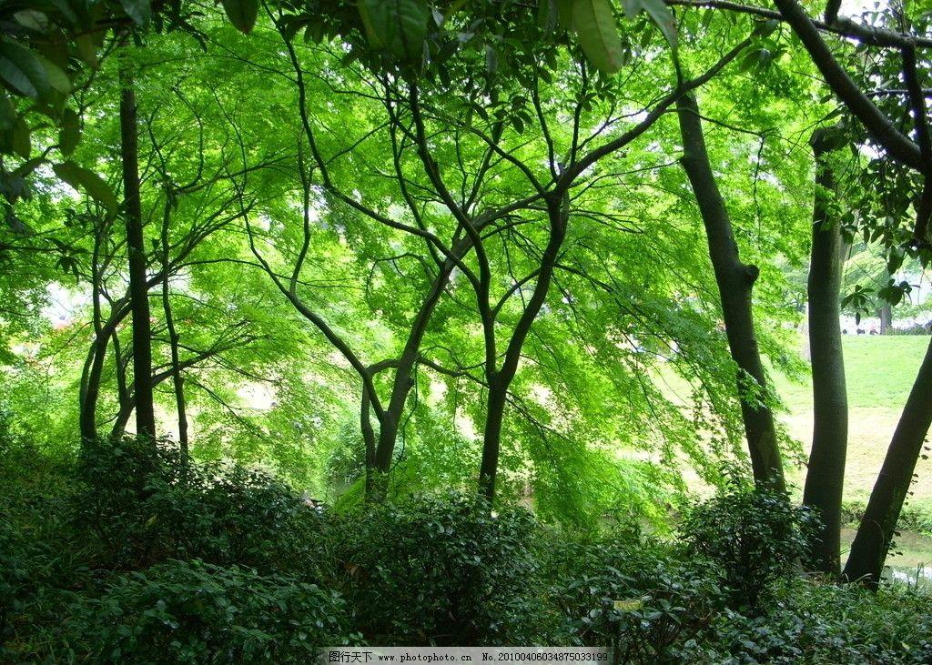 绿魂 绿色 大树 树丛 幽暗 密树林 绿叶 自然风景 大自然 摄影