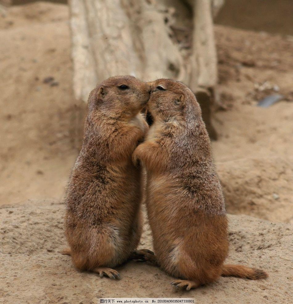 摄影图库 生物世界 野生动物    上传: 2010-4-6 大小: 1.