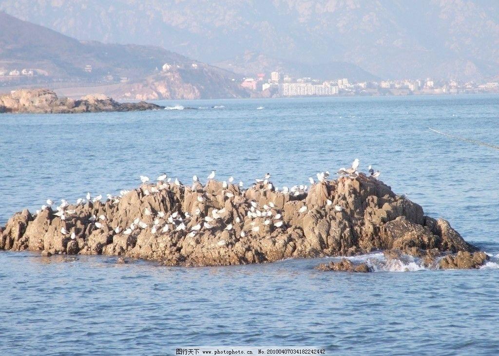 礁石 一群/礁石上的一群鸥图片