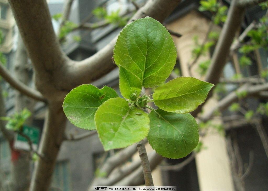 春天来了 树叶刚发芽图片