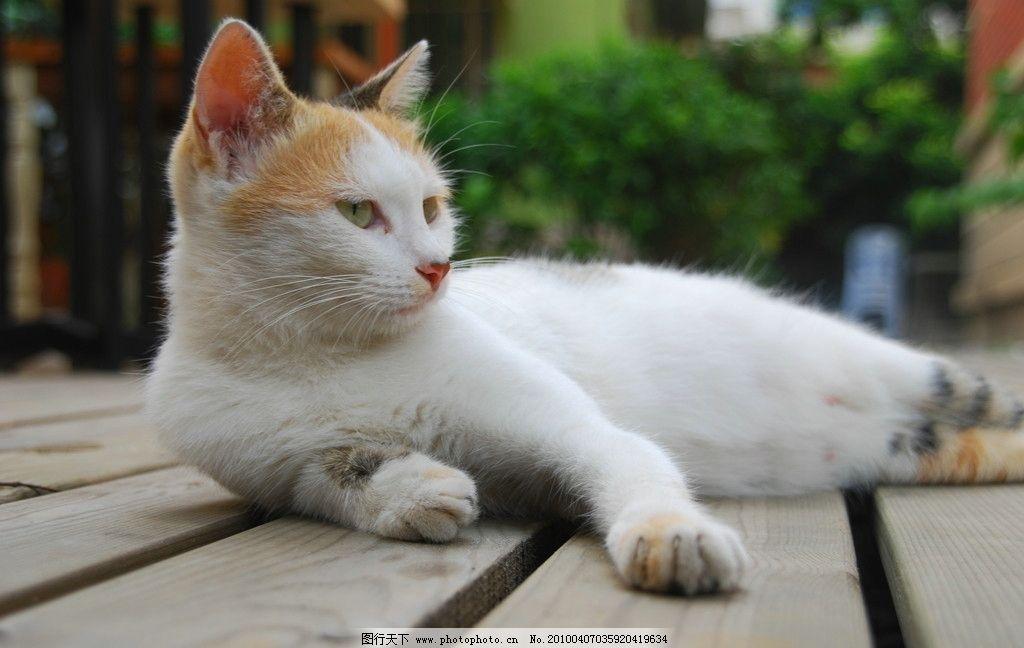 白猫 猫 悠闲 躺着 眺望 可爱 街头 家禽家畜 生物世界 摄影 300dpi j