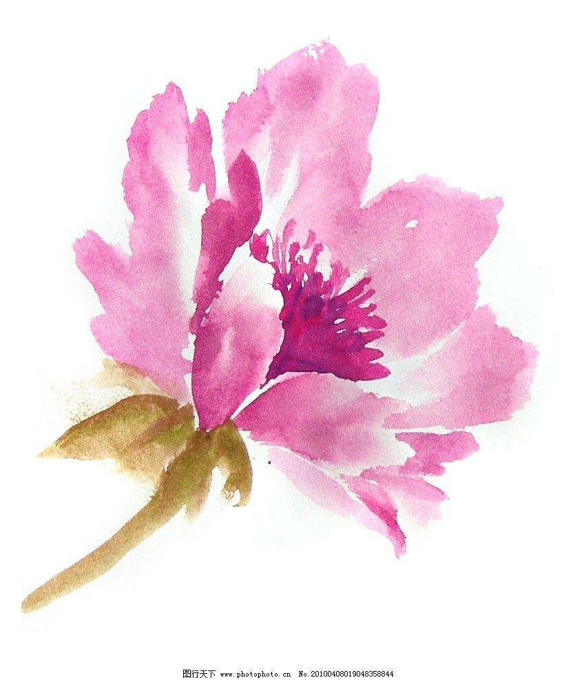 花卉 水彩花卉 粉色 牡丹