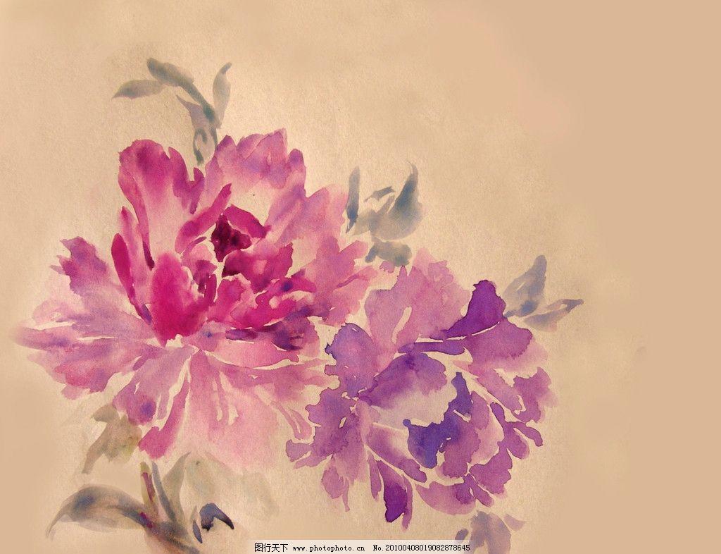 花卉 水彩花卉 牡丹 绘画