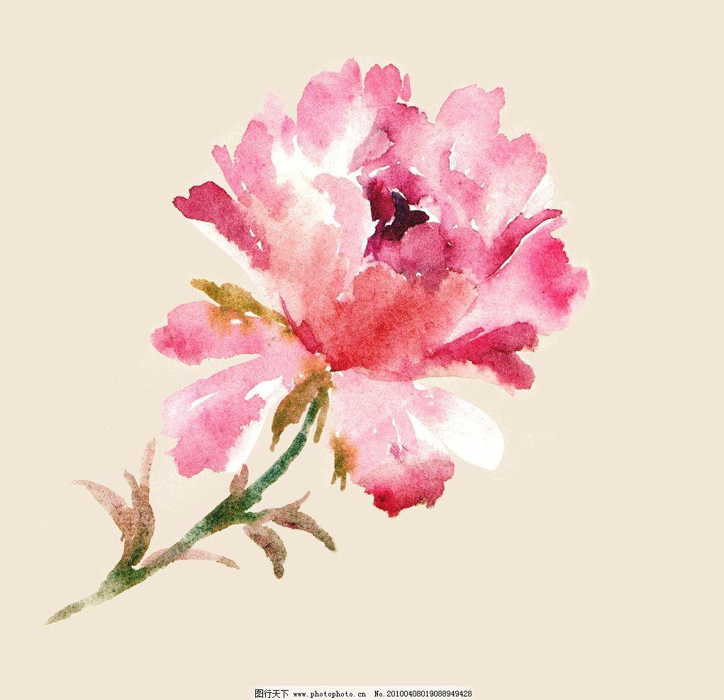 花卉 水彩 牡丹 绘画 绘画书法