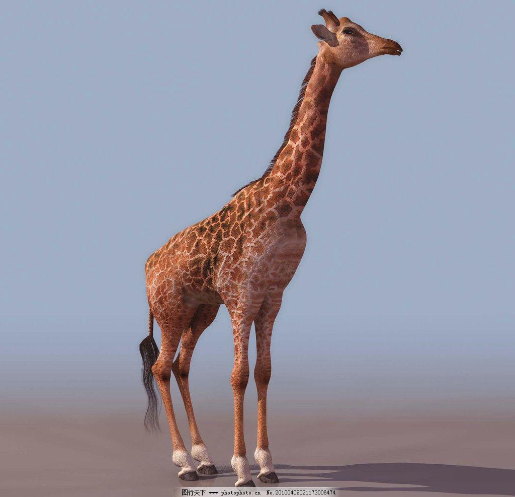 3d模型图库 动物类 长颈鹿图片