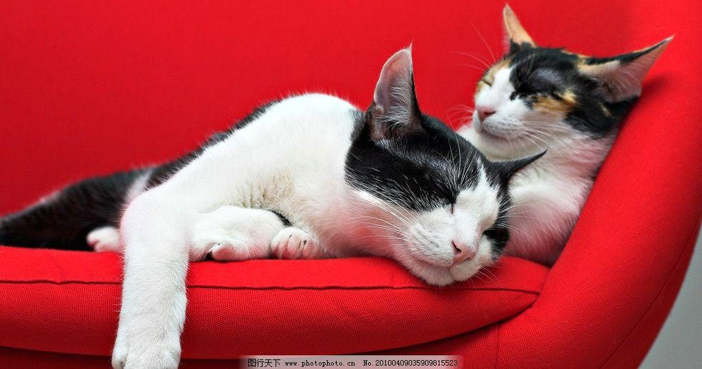 睡觉的猫 猫 沙发 红色 动物 宠物 家禽家畜 生物世界 摄影 72dpi jpg