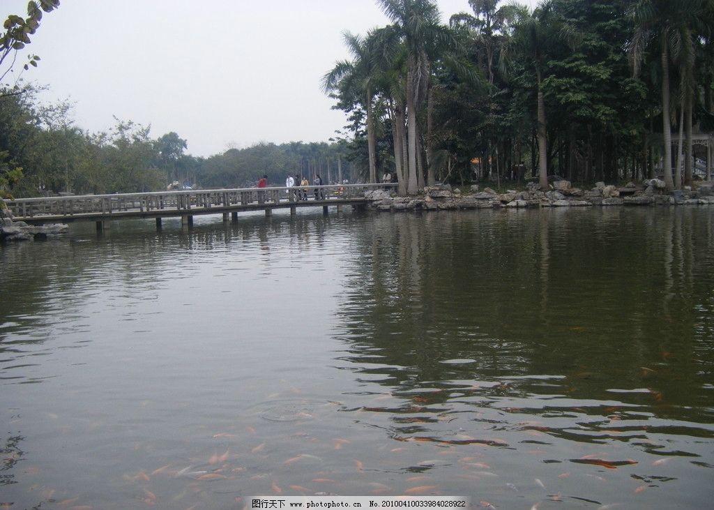 青秀山公园 桥 天空 椰树 山 树林 湖水 摄影 旅游 石头 国内旅游