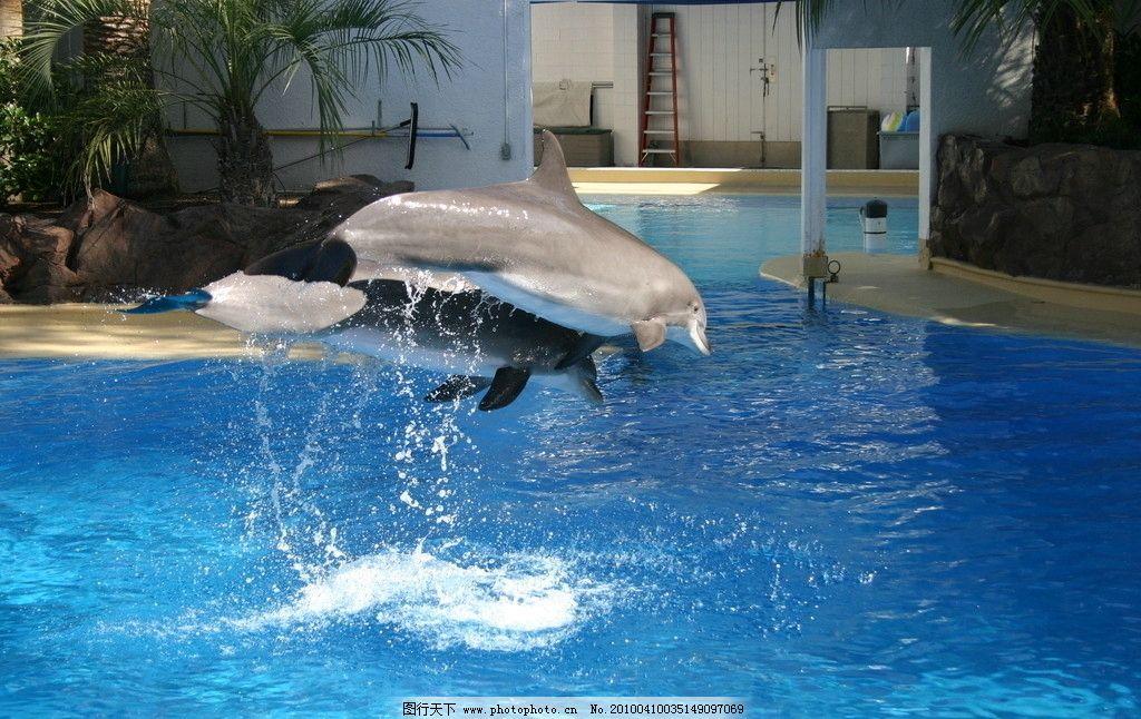 壁纸 动物 海底 海底世界 海洋馆 鲸鱼 水族馆 1024_646