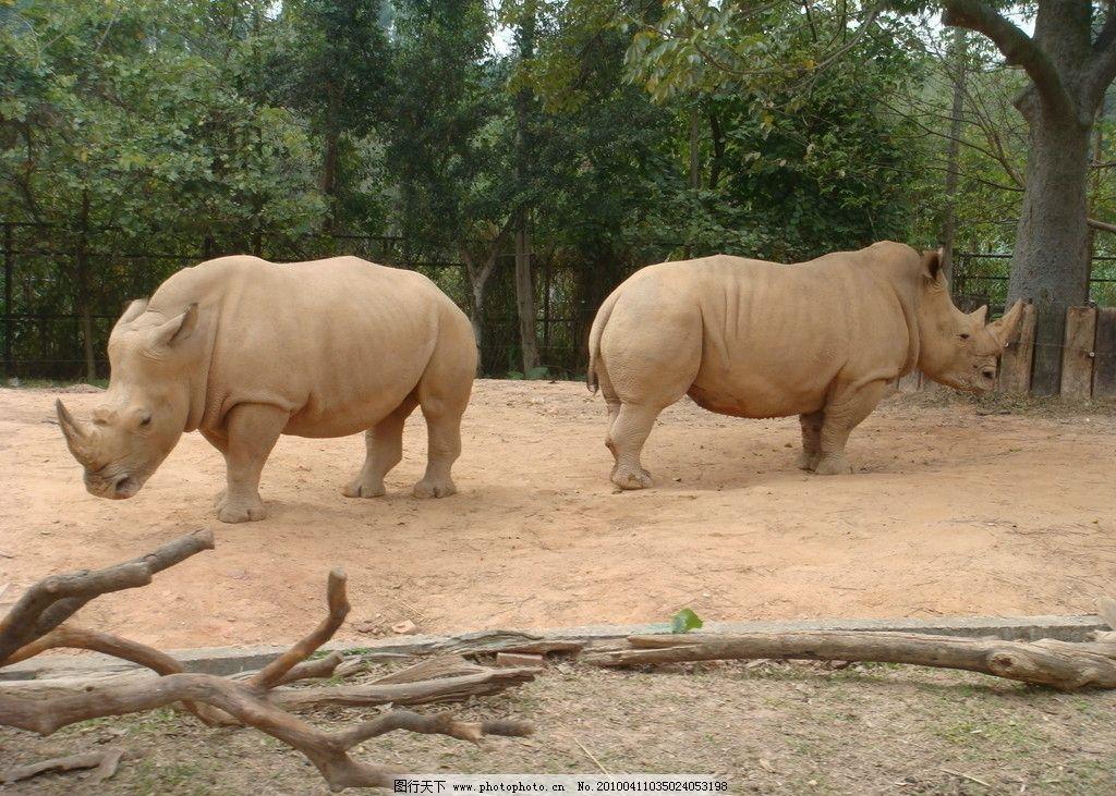 犀牛 野生动物园 野生动物