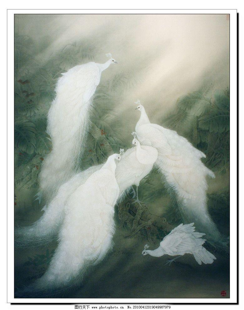 白色孔雀图片