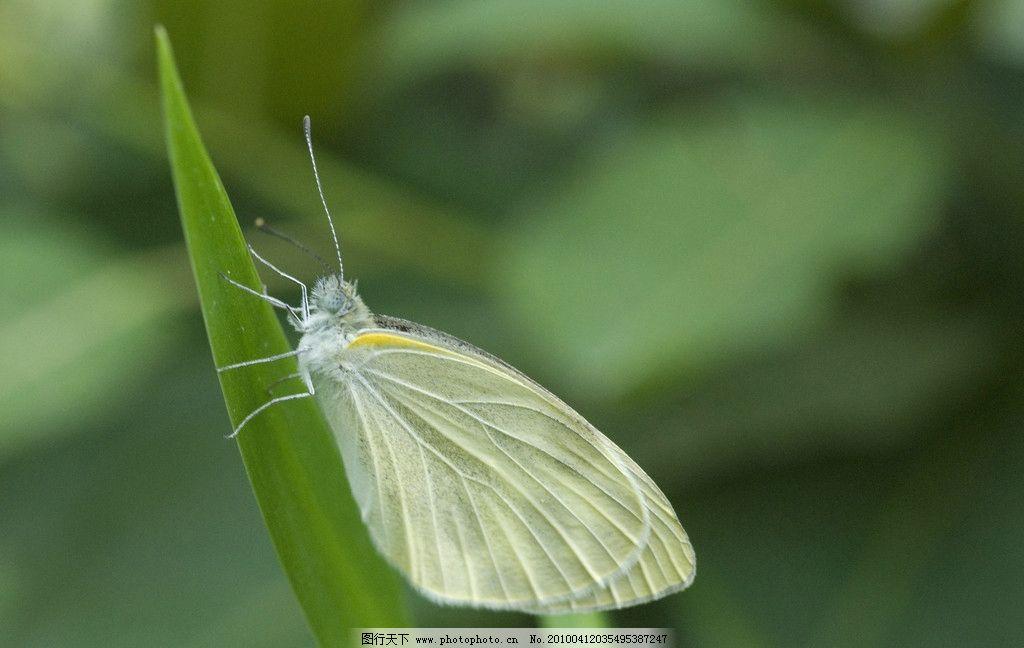 春天的飞蛾 微距摄影 昆虫 飞蛾 生物世界 摄影 200dpi jpg