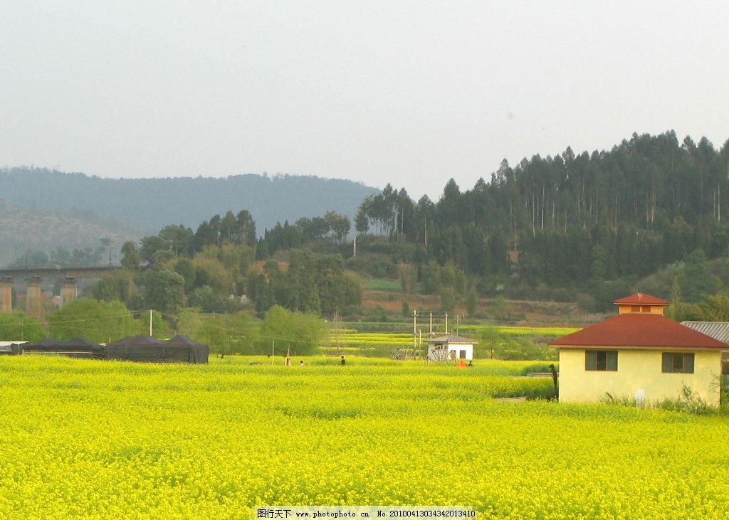 田野油菜花风景壁纸