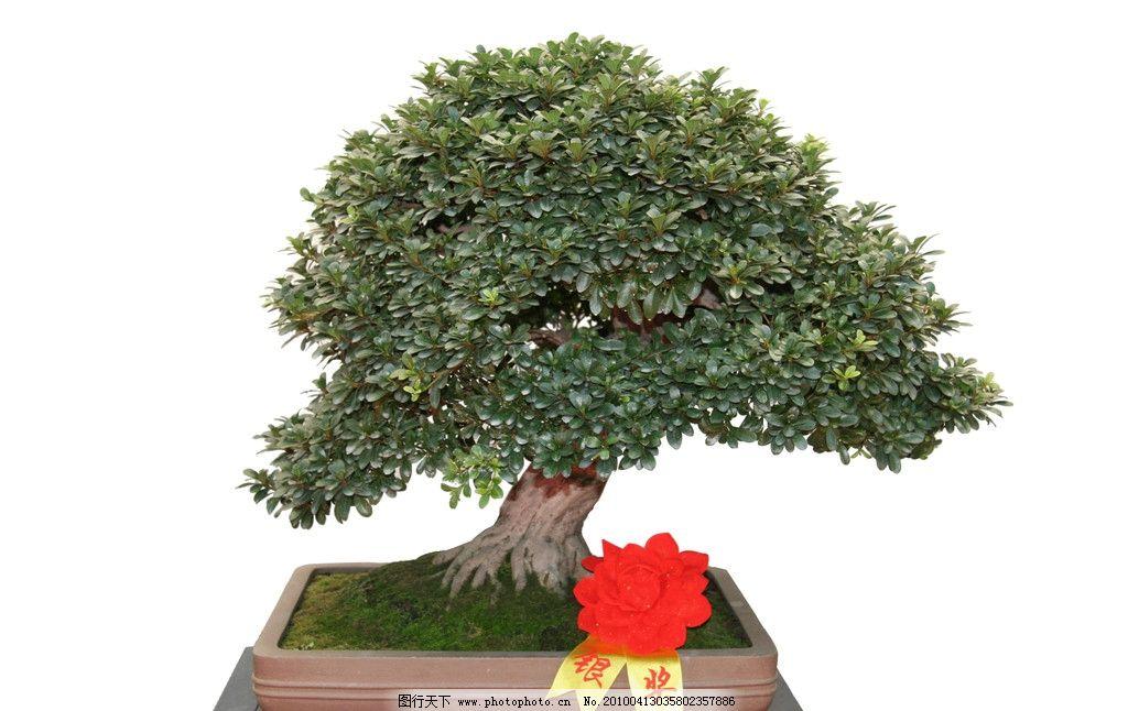 树桩盆景其他 照片 盆景 树木树叶 生物世界 摄影 72dpi jpg