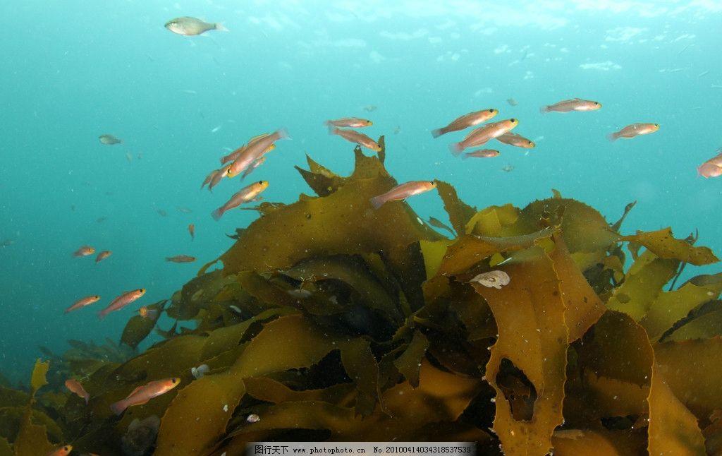 海底世界 自然 景观 景象 生物 动物 水中 树叶 海洋生物 软体生物