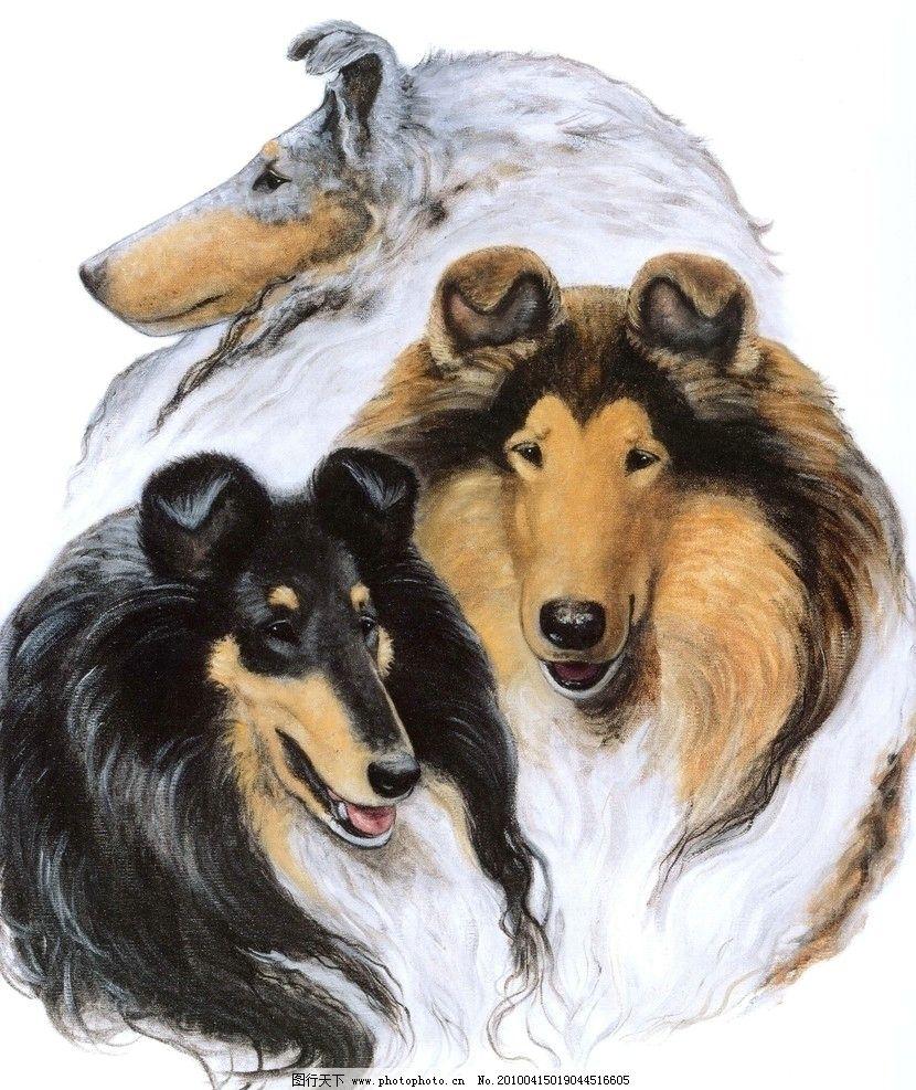 油画动物 手绘 装饰画 无框画 清晰 写真 喷绘 印刷 肌理 效果 艺术