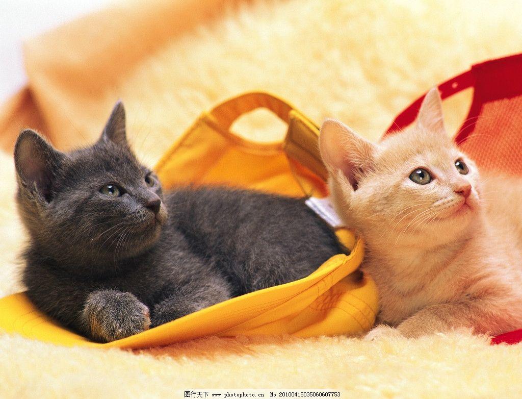 小猫 绒毯 野生动物 生物世界 摄影 350dpi jpg