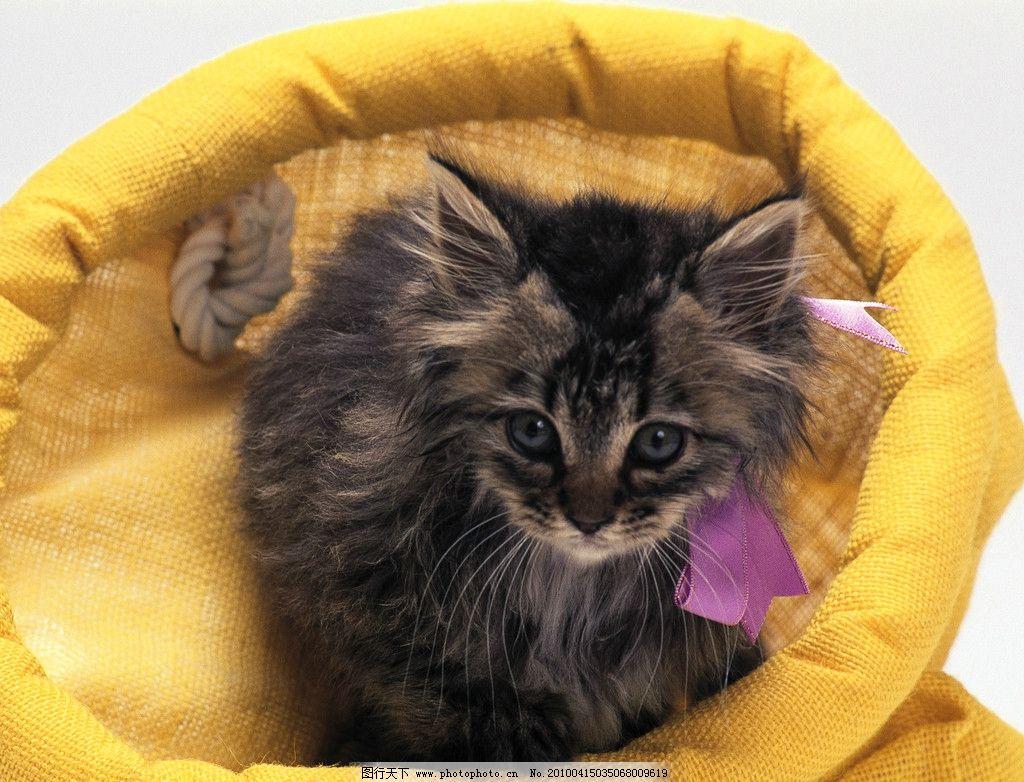 小猫 篮子 野生动物 生物世界 摄影 350dpi jpg