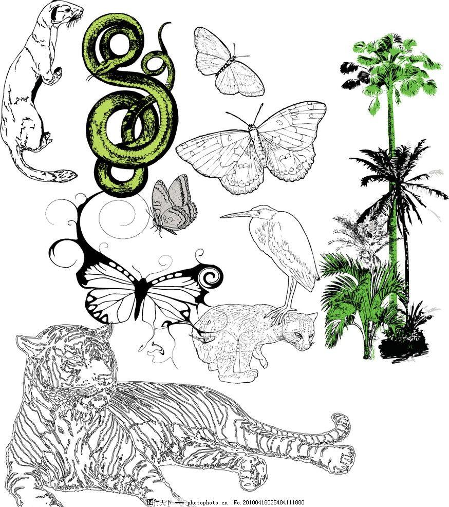 动物 老虎 虎 蝴蝶 蟒蛇 蛇 豹 金钱豹 椰子树 椰子 植物 鹭鸶 水鸟