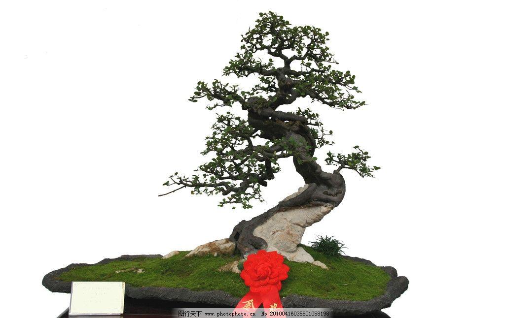 树桩盆景其他图片