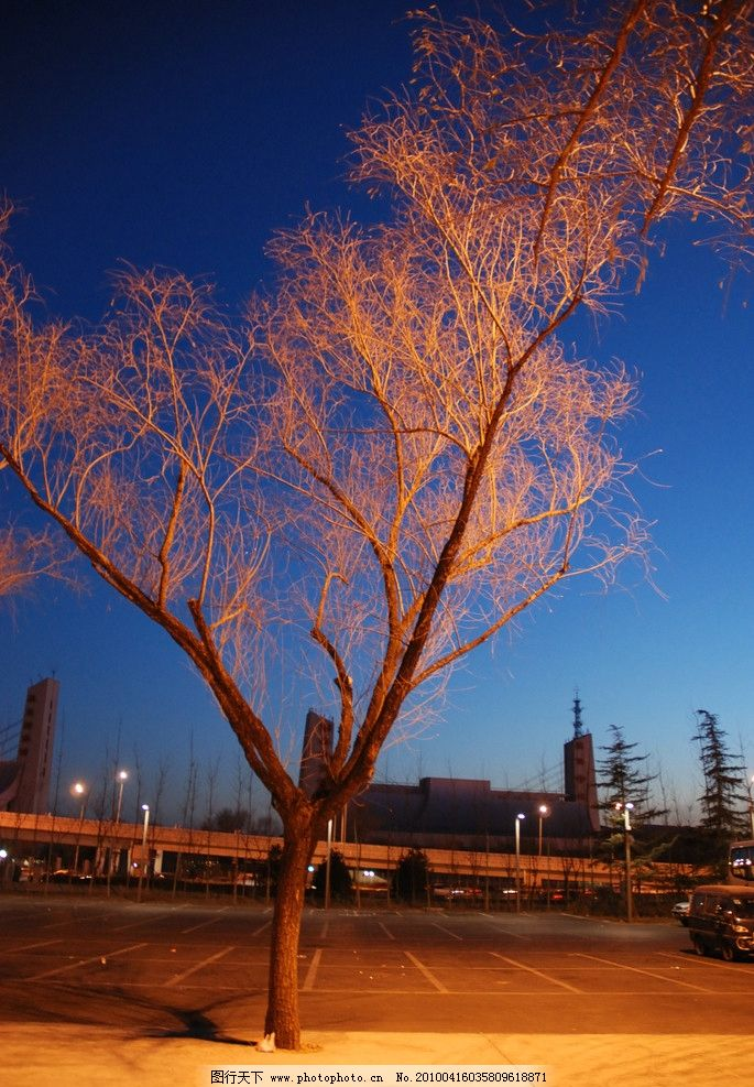 道路旁的树 夜晚