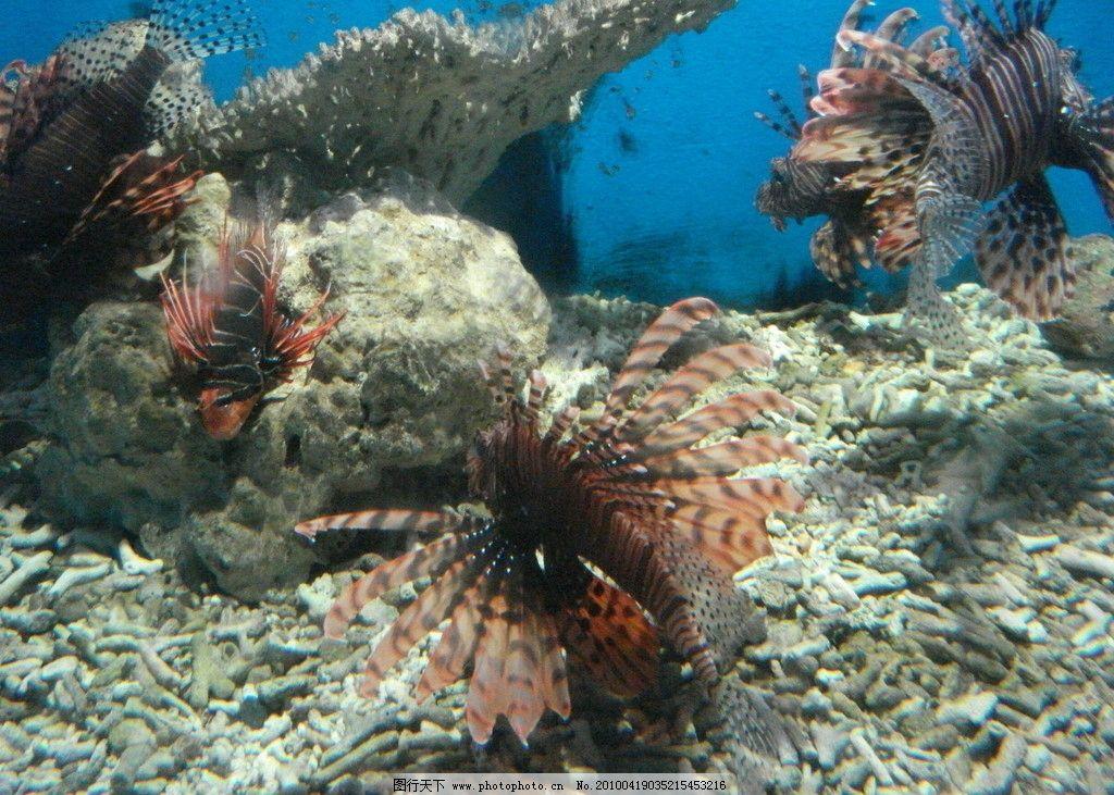 壁纸 海底 海底世界 海洋馆 水族馆 1024_731