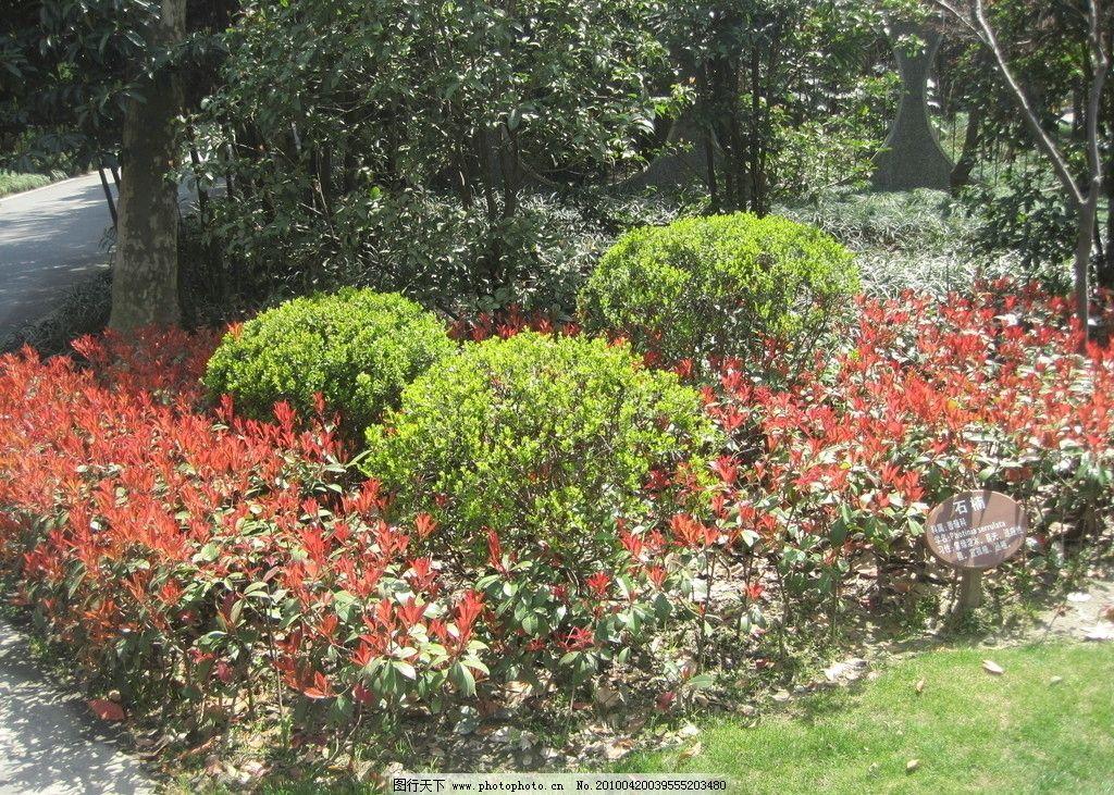 景观 灌木 玫瑰 植物 树木 植被 公园 花丛 生态 自然 园林建筑 建筑
