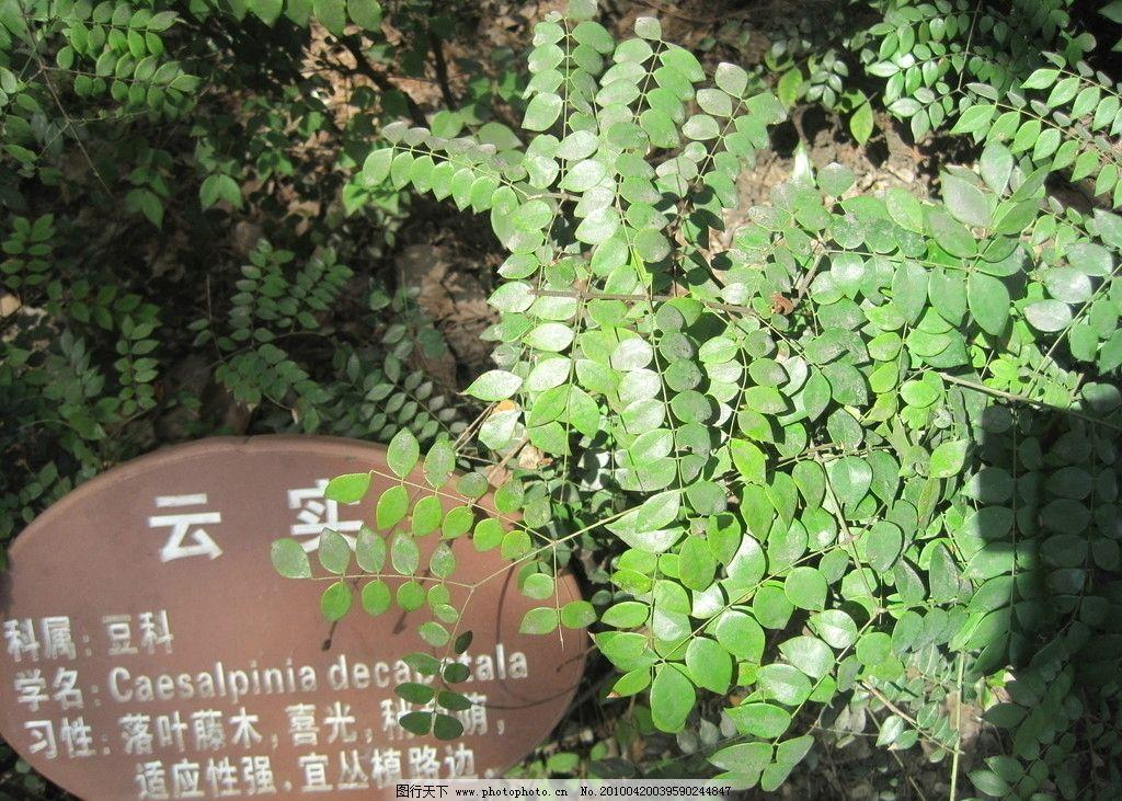 景观 植物 树木 植被 灌木 公园 花丛 生态 自然 云实 园林建筑