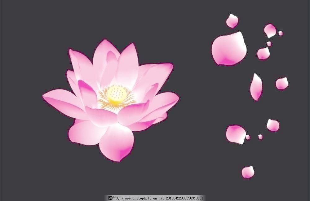 飘落的花瓣 (绝对原创)图片