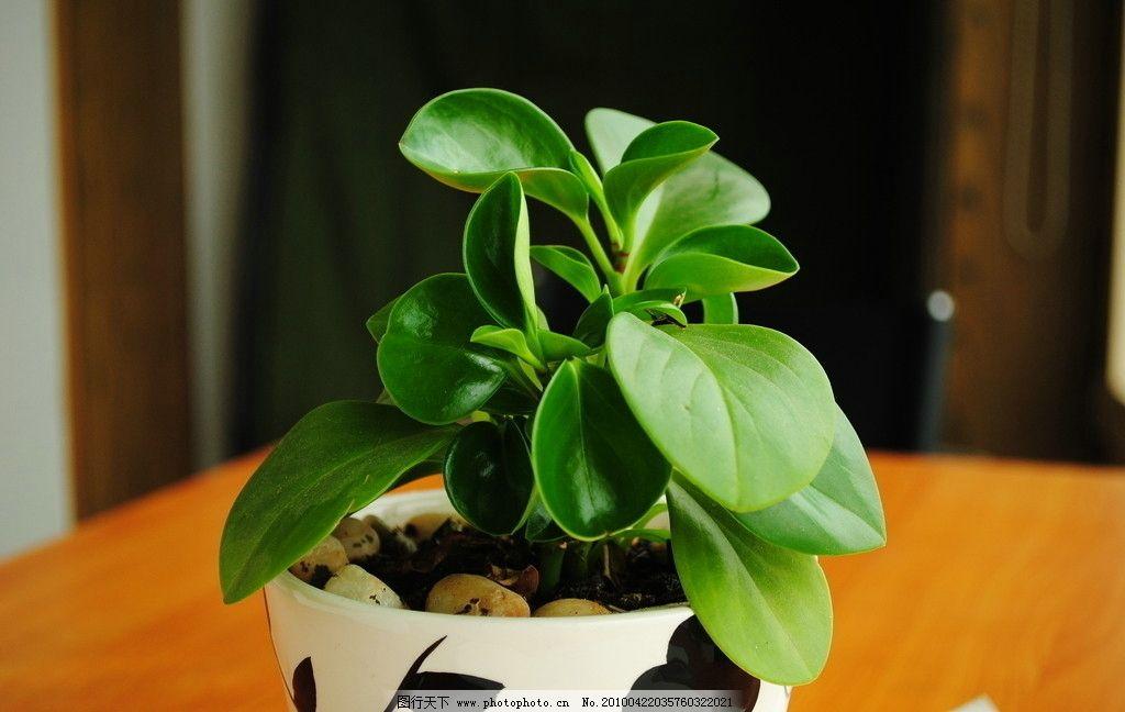 绿色植物盆花图片
