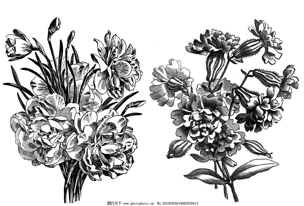 康乃馨 芍药 郁金香 花束 手绘 花 叶子 藤 绘画艺术 设计素材 300dpi