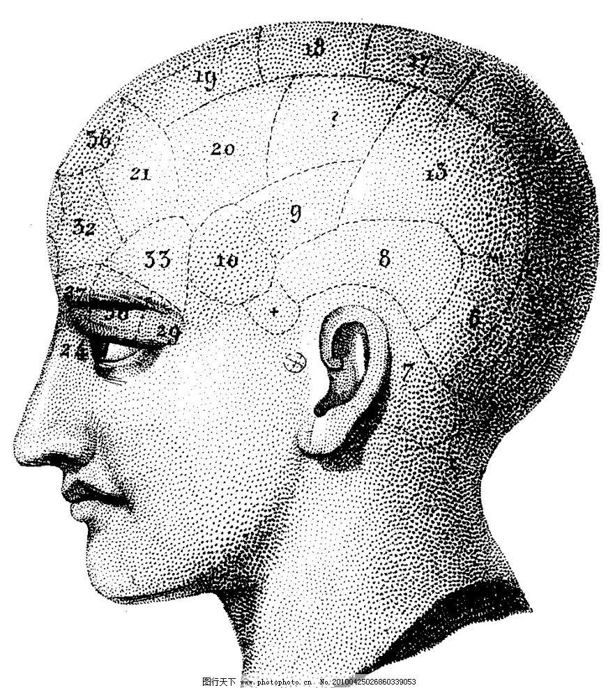 人头盖骨分区侧面图片