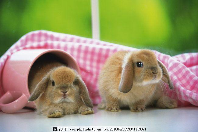 动物世界 动物图片 动物 动物剪影 动物图片 动物世界 图片素材 生物
