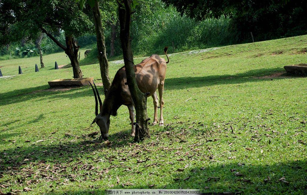 树下乘凉 野生动物 动物 羚羊 长隆野生动物园 树 草地 羊 生物世界
