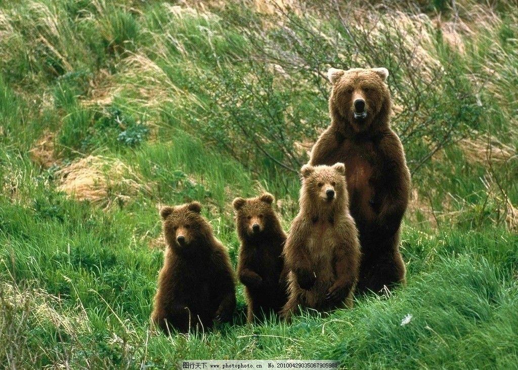 狗熊 小狗 熊猫 野生动物 动物大全 动物世界 草地 生物世界 摄影 100