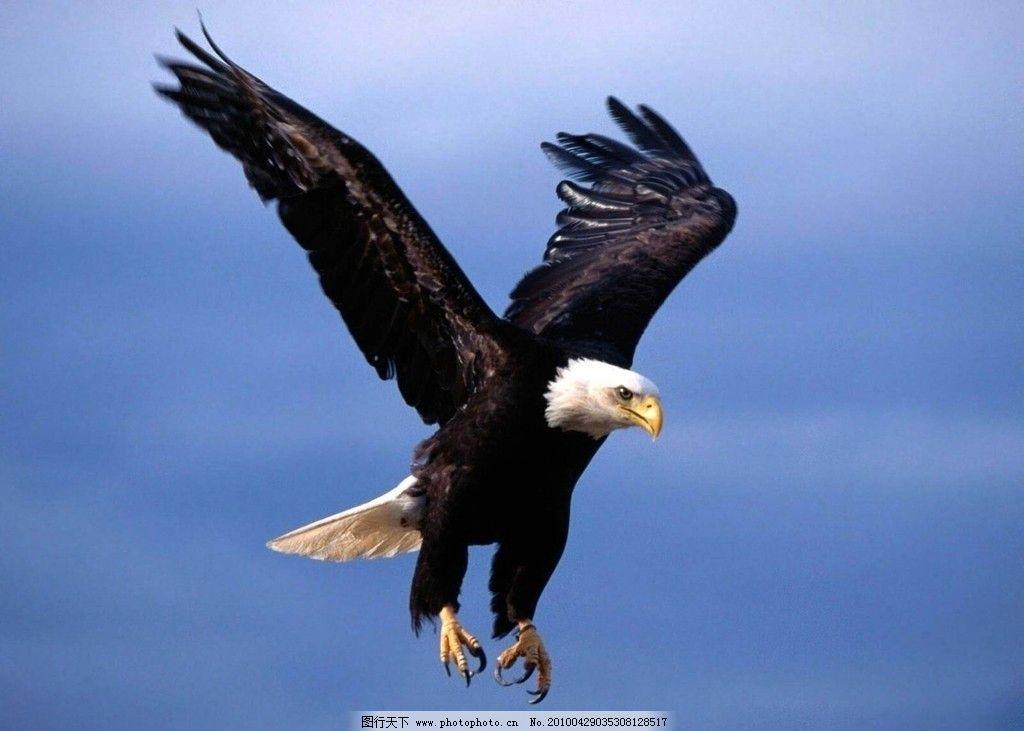 鸟类 动物世界