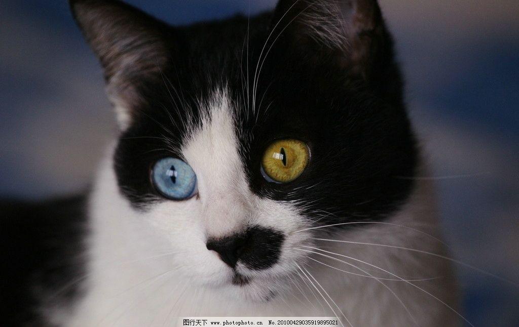 彩铅猫科动物眼睛