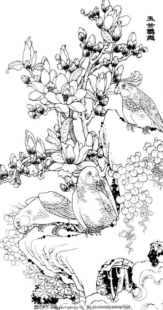 玉兰鹦鹉 线描 工笔画 黑白 白描 线条 陈金莺 矢量 陈金莺工笔画册