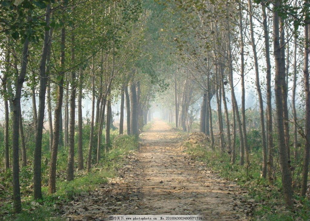 林荫小道 树 丛林 小道 田野 风景 景色 自然 舒适 悠闲 漫步 自然