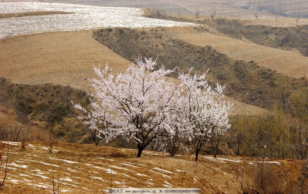 杏树朝鲜族乡风景
