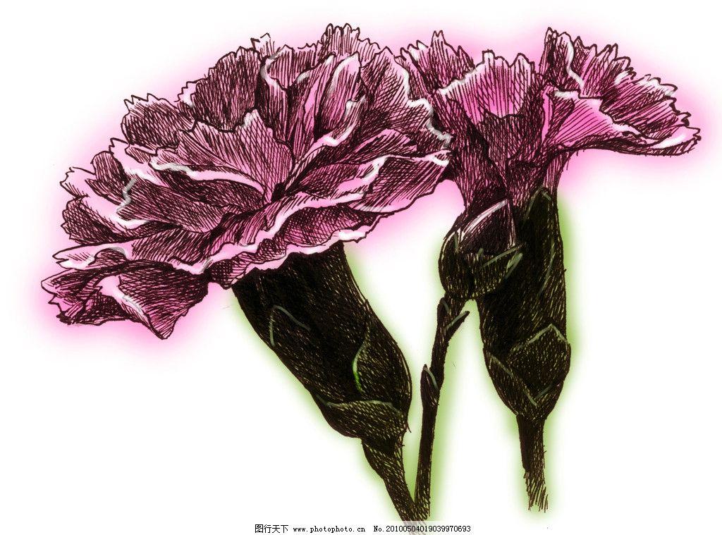 康乃馨 手绘康乃馨 绘画书法 文化艺术 设计 1000dpi jpg