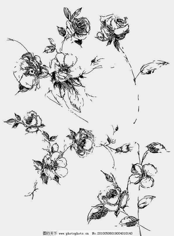 手绘玫瑰 花 速写 钢笔手绘 线描 素描 月季 花卉 绘画 美术绘画