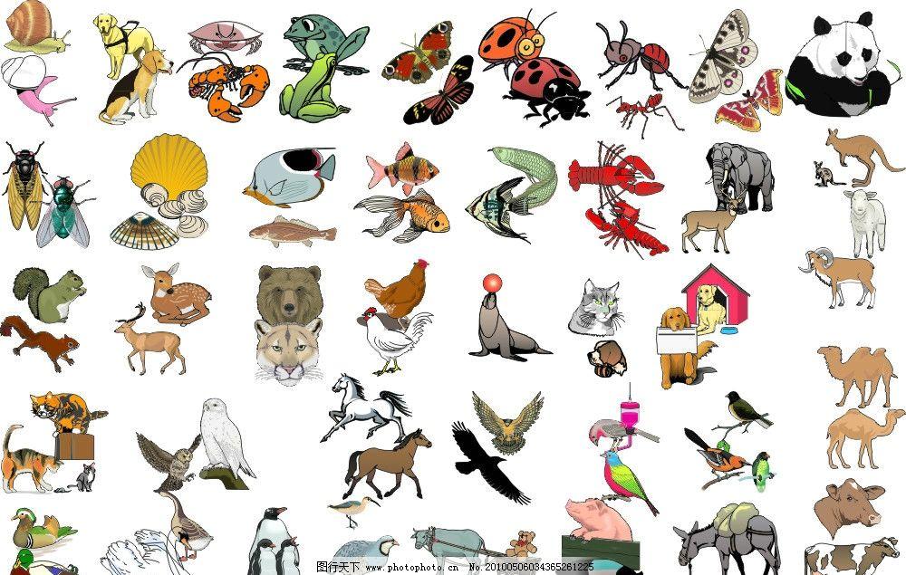 狗 羊 马 老鹰 骆驼 牛 狮子 驴 猪 猴子 老虎 熊猫 野生动物 生物