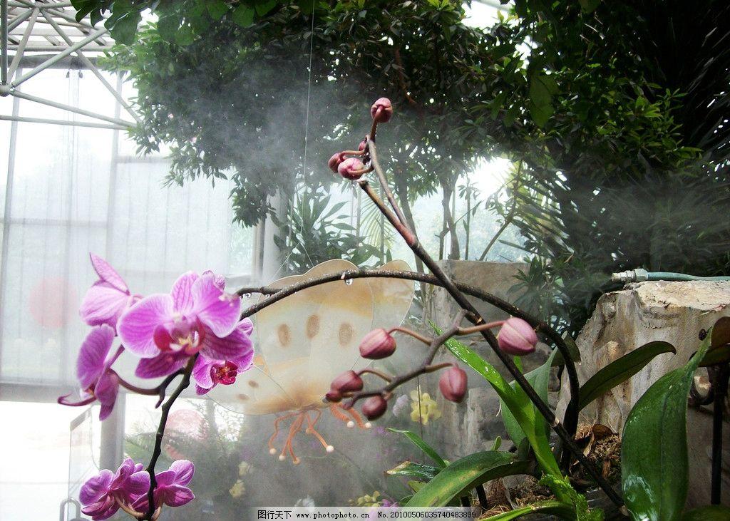 水露兰花图片