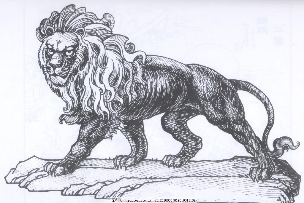 狮子图 兽 线描 工笔画 黑白 白描 线条 陈金莺 矢量 陈金莺工笔画册