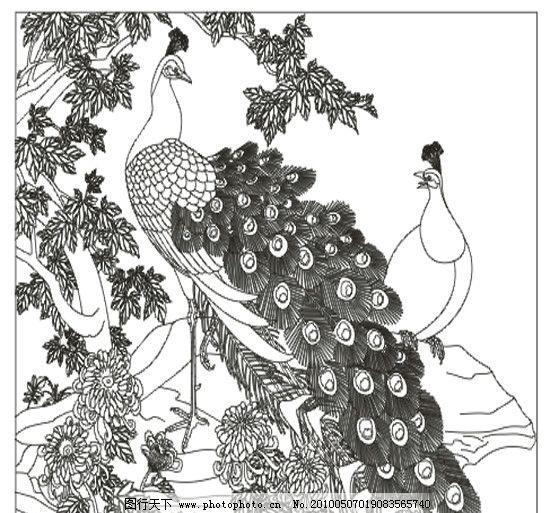 孔雀菊花图 孔雀 菊花 树叶 一对孔雀 石头 美术绘画 文化艺术 矢量