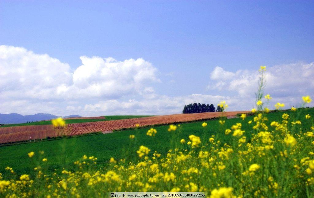 阳光照耀下的油菜花田地