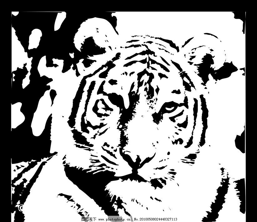 黑白老虎图片_野生动物_生物世界_图行天下图库