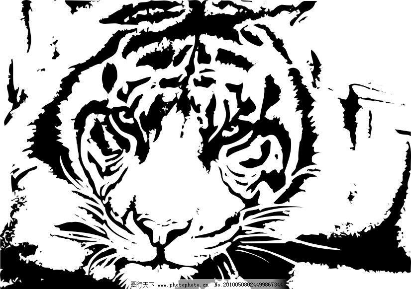 黑白老虎图片