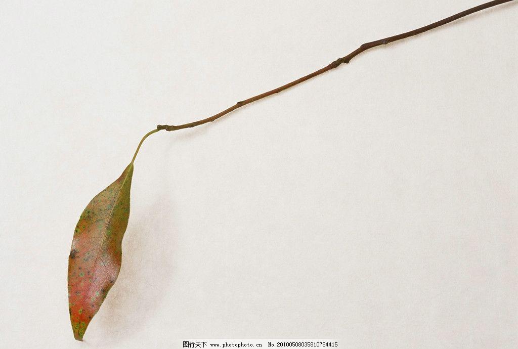 树叶 叶子 枯叶 树枝 飘落的叶子 秋天的叶子 落叶 枯黄 秋天到了